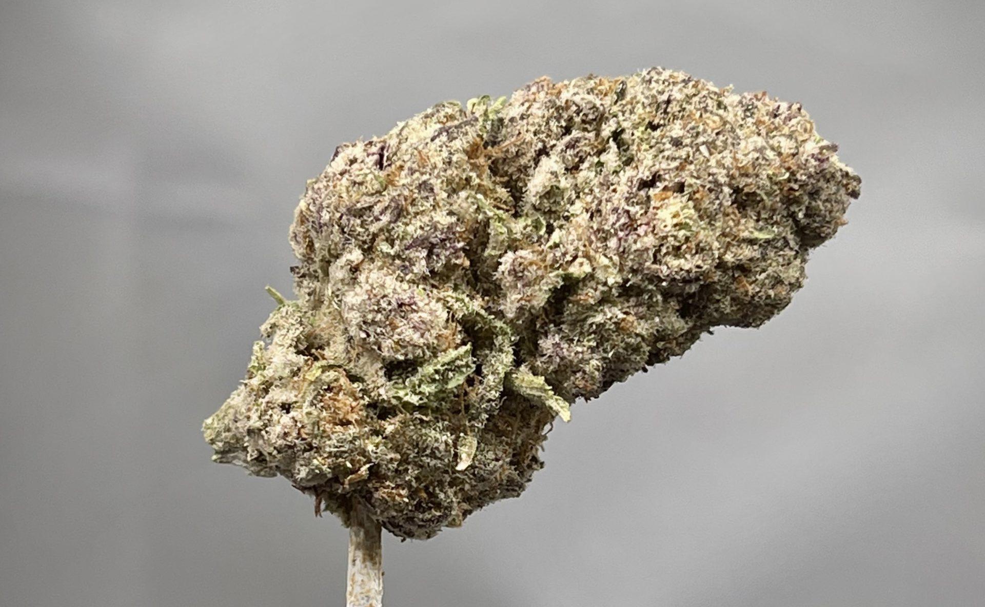 purplepunchmids